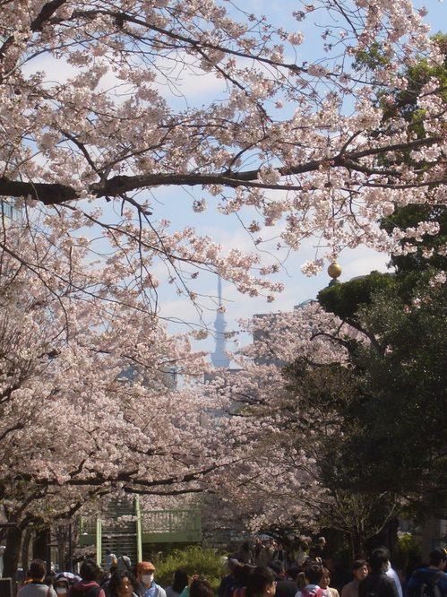 スカイタワー桜.jpg