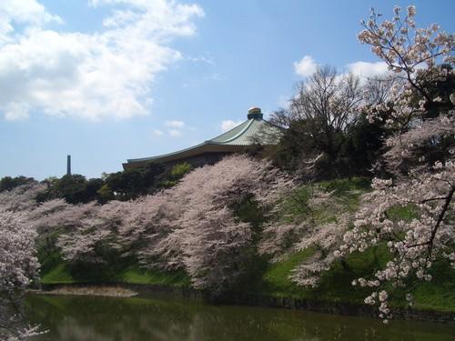 武道館桜.jpg