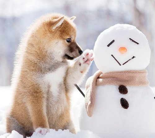 犬と雪だるま.jpg